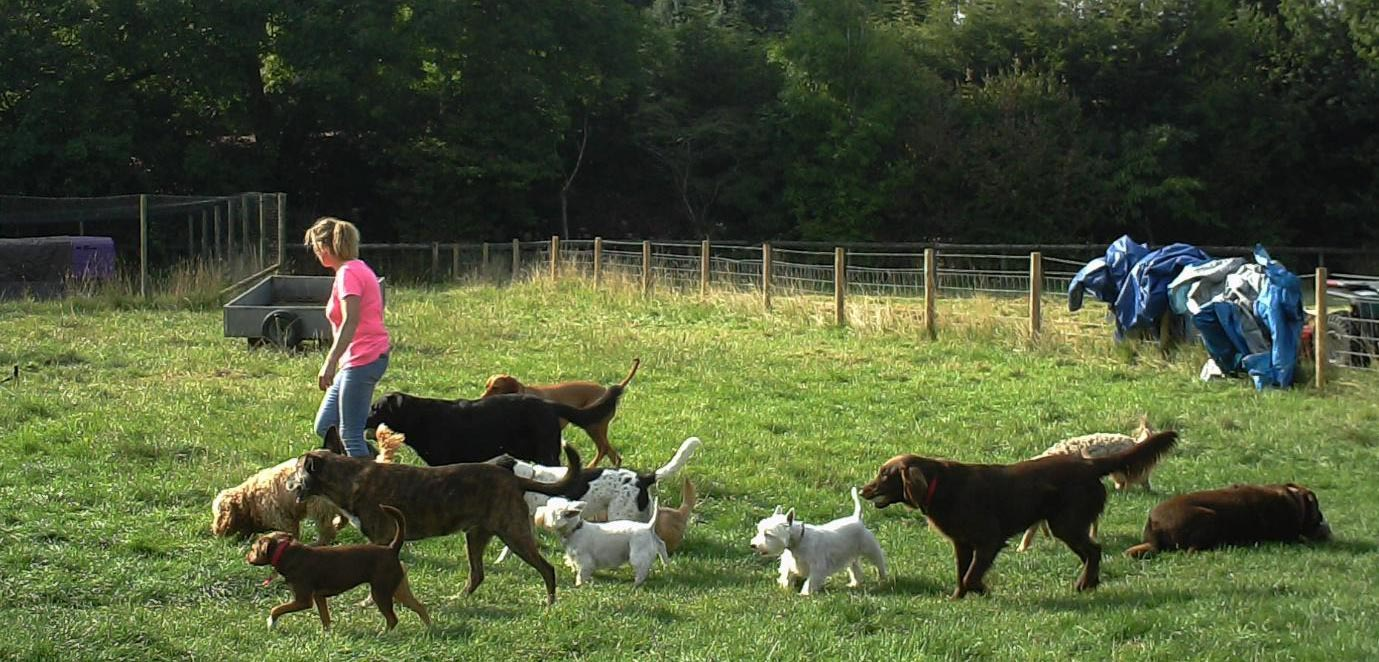 How Much Dog Boarding Cost Uk